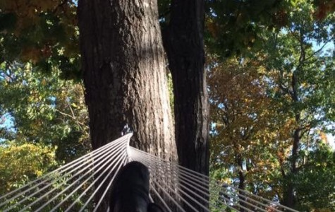 The Myth of the UNE Hammock Club